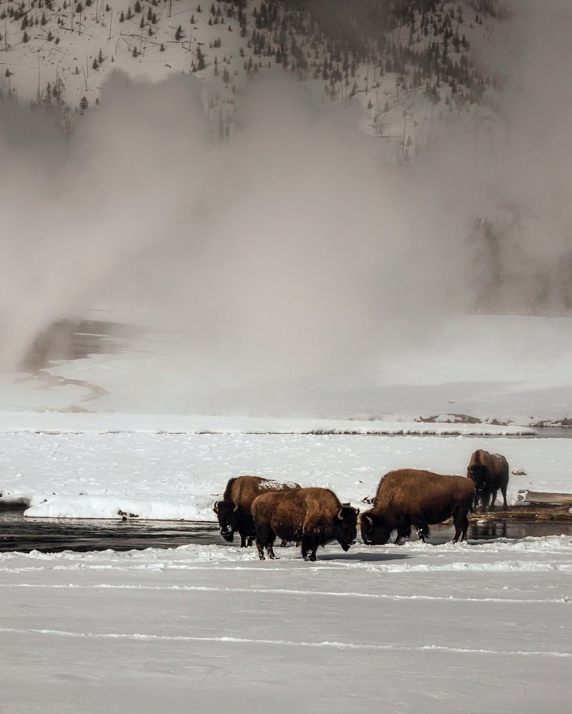 Yellowstone-Jan-2009-012809-0481-791.jpg