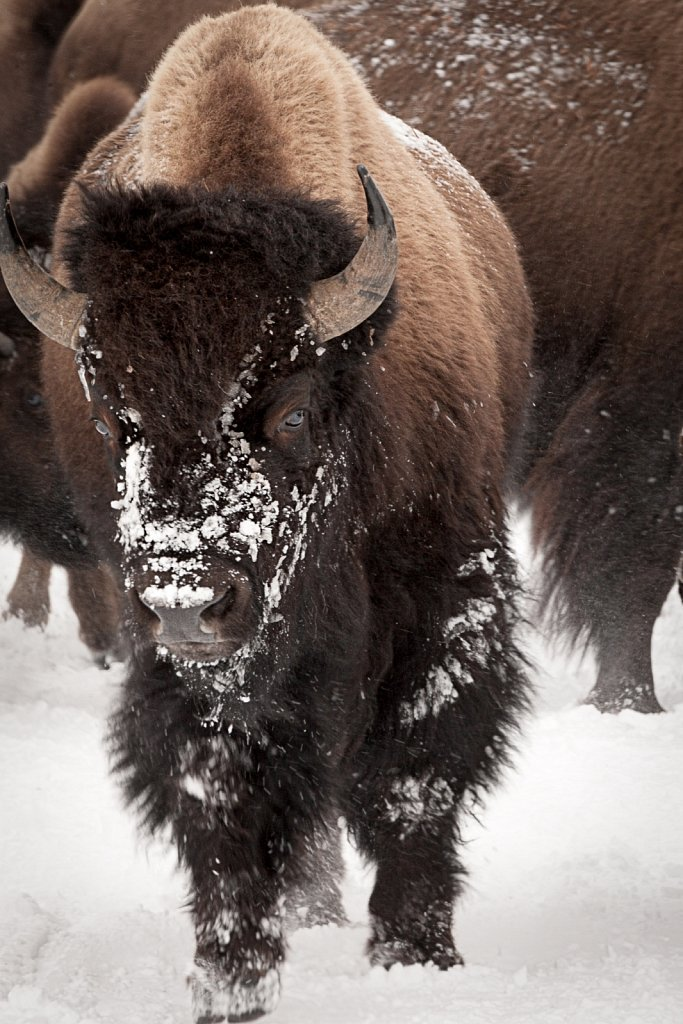 Yellowstone-Jan-2009-013009-1256-873.jpg